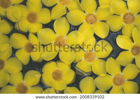 Abstract natural background. Collection with different colour tones of yellow tropical flowers in water. Summer fresh spa relax calm mood concept. For design wallpaper screensaver web backdrop