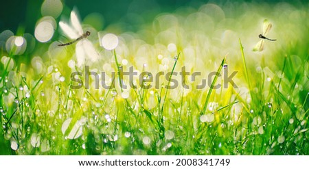 Fresh grass and sparkling drops of morning dew in warm sunlight, with shallow focus and flying dragonflies in nature outdoors. Royalty-Free Stock Photo #2008341749