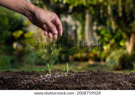 Farmer giving granulated fertilizer to young seedling sprout plants. Royalty-Free Stock Photo #2008759028