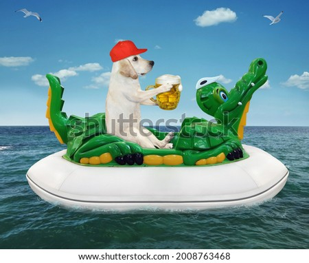 A dog labrador in a red cap with a mug of beer is floating on an inflatable crocodile in the sea at a resort.