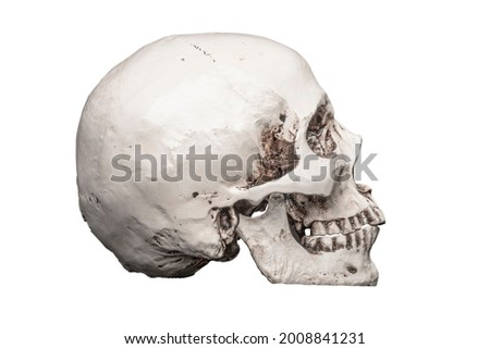 Skull. Human Skull Skeleton. Grim Reaper Gothic Horror Death. Head. Hells Angel Biker Badge Skull Motif. Motorcycle Gang Badge. Clipping Path in JPEG for Easy Compositing. Isolated on White Background