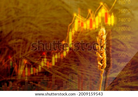 Diagram of rising food prices. Increase in the price of wheat seedson the graph with dollar sign. Put up price of seeds. Exchange quotes Royalty-Free Stock Photo #2009159543