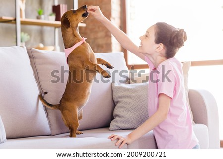 Portrait of nice cheerful preteen girl playing with doggy feeding having fun teaching puppy dancing at light home house flat indoors Royalty-Free Stock Photo #2009200721