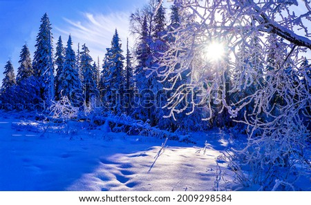 The winter sun shines through the snowy branches of trees. WInter snow sunshine. Winter forest sunshine snow. Winter sunshine in snowy forest Royalty-Free Stock Photo #2009298584