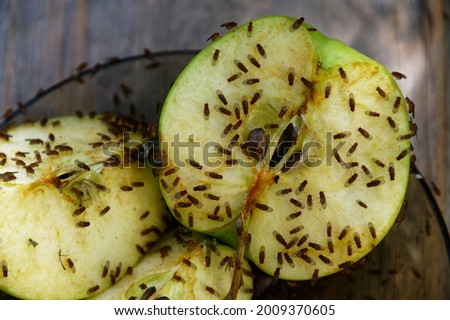 A cut apple has attracted fruit flies to feed on it Royalty-Free Stock Photo #2009370605