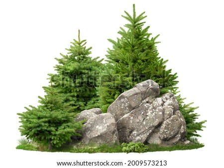 Cutout rock surrounded by fir trees. Garden design isolated on white background. Decorative shrub for landscaping. High quality clipping mask for professionnal composition Royalty-Free Stock Photo #2009573213