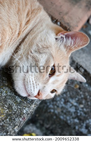 Cute tabby ginger cat outdoors