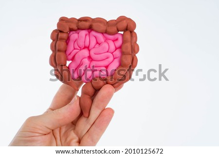 Gastrointestinal tract in hands of person. Metaphor of study of stomach. Checking gastrointestinal tract. Human Intestinal on white background. Multicolored stomach in hand. Intestinal health concept Royalty-Free Stock Photo #2010125672