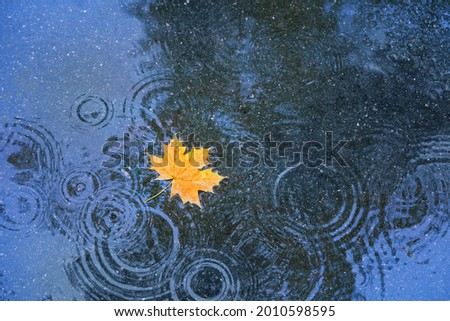 autumn yellow leaf in puddle, natural background. rainy day. autumn season atmosphere image. symbol of fall time. top view Royalty-Free Stock Photo #2010598595