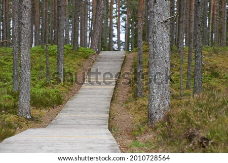wooden pedestrian bridge over forest, over forest and pond path way pedestrians of stumps adventure, educational in nature. Selective focus. High quality photo Royalty-Free Stock Photo #2010728564