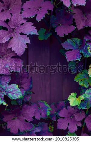 Grape leaves background neon colours creative idea. High quality photo