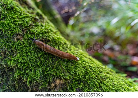 a nudibranch sits on moss  The background is unsharp  the picture was taken in a forest after a rainy day