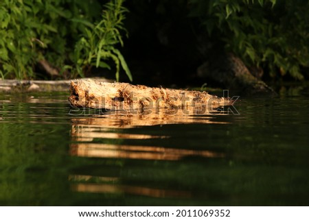 Old wooden snag in the water of a lake Royalty-Free Stock Photo #2011069352