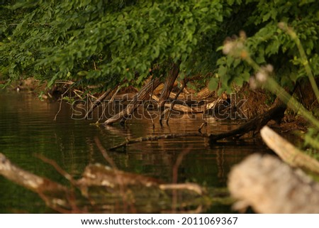 Old wooden snag in the water of a lake Royalty-Free Stock Photo #2011069367