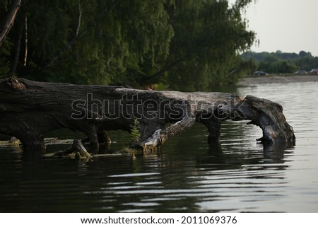 Old wooden snag in the water of a lake Royalty-Free Stock Photo #2011069376
