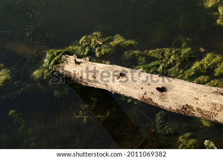 Old wooden snag in the water of a lake Royalty-Free Stock Photo #2011069382