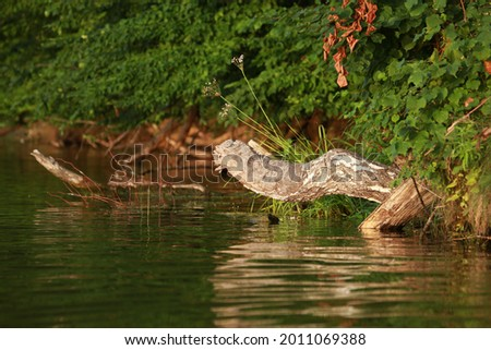 Old wooden snag in the water of a lake Royalty-Free Stock Photo #2011069388
