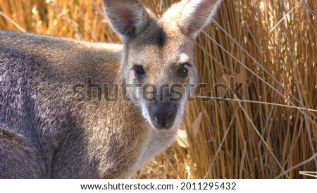 Exotic animals in various places. Wild animals, vultures, sea animals and much more. High-quality photos of beautiful animals.