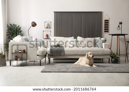 Adorable Golden Retriever dog in living room Royalty-Free Stock Photo #2011686764