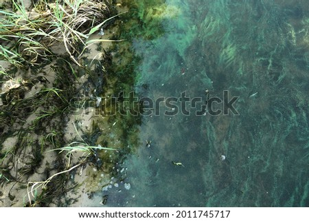 Sandy shore and water surface covered with algae