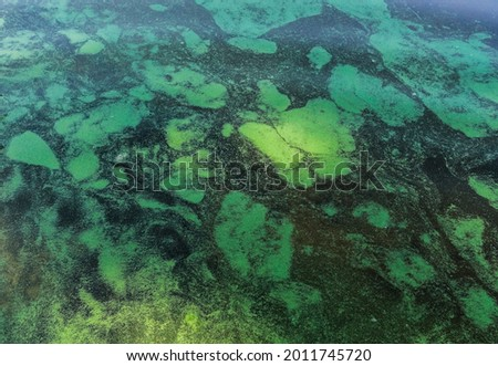 Fantastic background of river duckweed and seaweed