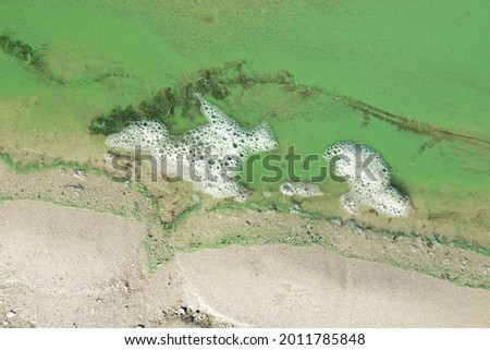 Sand and river water covered with duckweed and algae