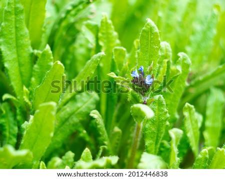 Wild blue flowers on fresh green grass blurred bokeh amazing nature background. Tranquil closeup cyan plants macro wallpaper. Beautiful meadow flower screensaver on the desktop. Copy space.