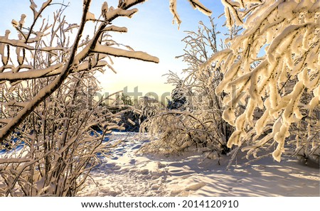 Tree branches in the snow in the winter forest. Winter snow scene. Snow covered branches. Winter snow Royalty-Free Stock Photo #2014120910