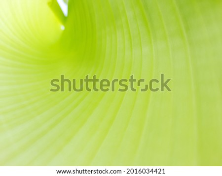 banana leaf texture High Res Stock Images