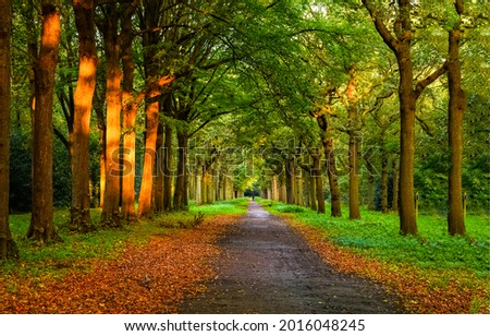 Shady alley in the autumn time. Autumn alley way. Autumn alley trees. Autumn alley park Royalty-Free Stock Photo #2016048245