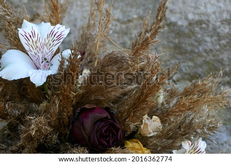 Dry thistle flowers with grass, closeup. Wild decorative plants from nature. Arranged on dark wood. Front view. Diffused light coming from the window. . High quality photo Royalty-Free Stock Photo #2016362774