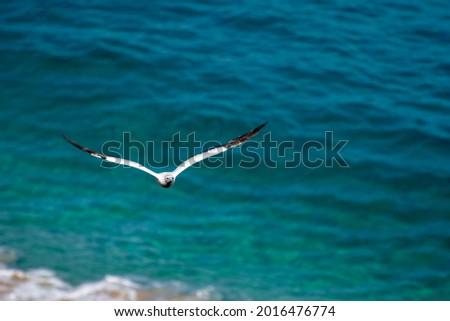 Seabird in Fernando de Noronha, Pernambuco, Brazil. Royalty-Free Stock Photo #2016476774