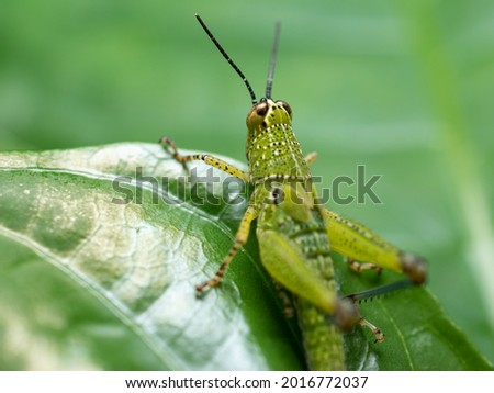 a grasshopper with beautiful colors
