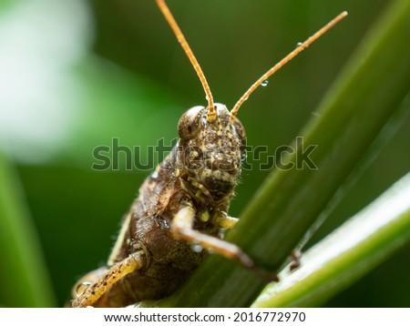 a cute grasshopper on a plant