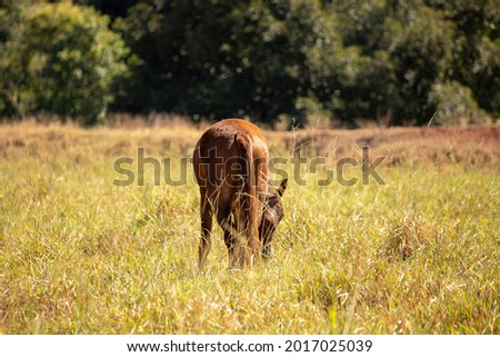 Horse resting in a pasture area of a Brazilian farm with selective focus Royalty-Free Stock Photo #2017025039