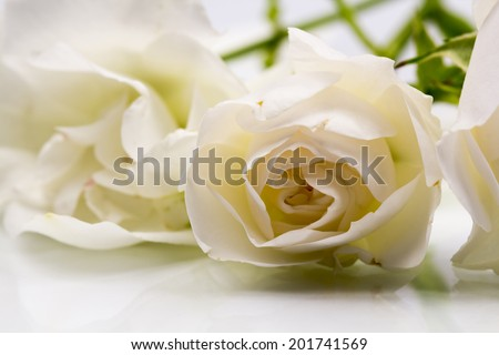 Beautiful white rose with details  #201741569