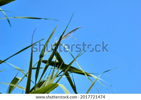 Under the blue autumn sky, green grasses fly. High quality photo Royalty-Free Stock Photo #2017721474