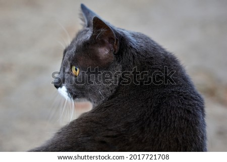 Portrait shot of a stray grey cat, with squinting eyes. The cat is sitting on grass. High quality photo Royalty-Free Stock Photo #2017721708