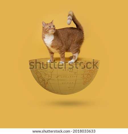 Cat Day, International Cat Day, world Cat Day, 8 august, cat is on half Earth, 3D rendering,Cat Appreciation Day