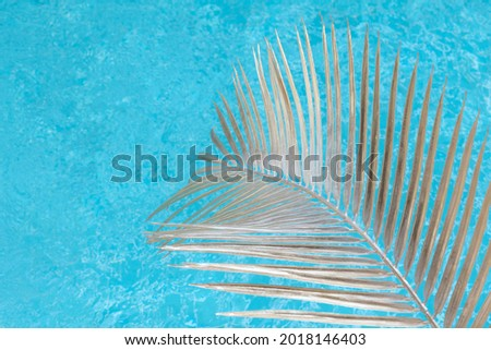 Swimming pool with palm leaf in sunlight