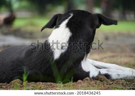 a sad dog in park