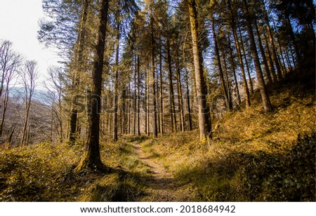 A path in a pine forest. Pinewood path. Pine tree forest path view. Path in pinewood Royalty-Free Stock Photo #2018684942