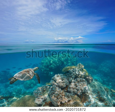 Tropical seascape, coral reef underwater and islands at the horizon, split view over under water surface, south Pacific ocean, Oceania Royalty-Free Stock Photo #2020731872