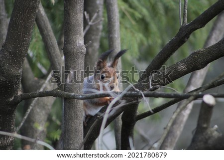 Squirrel on the tree. High quality photo, Selective focus Royalty-Free Stock Photo #2021780879