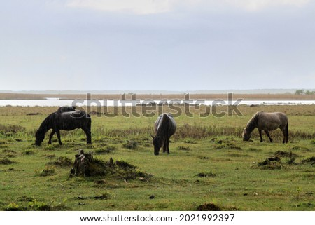 Three horses eating in a field. High quality photo. Selective focus Royalty-Free Stock Photo #2021992397