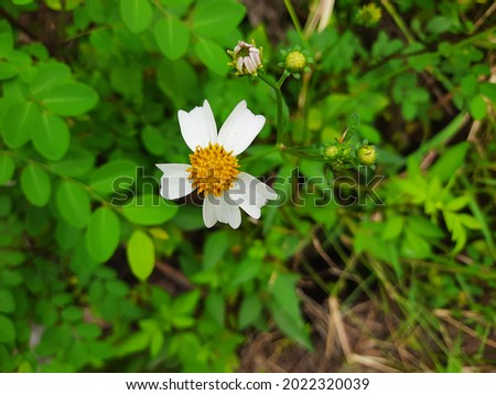tropical wildflowers High Res Stock Images