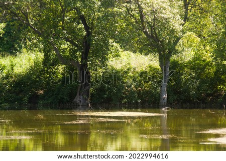 The Green Tropical Forest and Swamp  Royalty-Free Stock Photo #2022994616