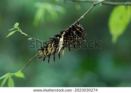 Invertebrate caterpillar on forest leaf Royalty-Free Stock Photo #2023030274