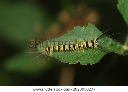 Invertebrate caterpillar on forest leaf Royalty-Free Stock Photo #2023030277