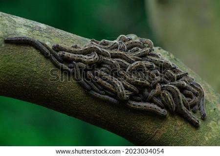 Invertebrate caterpillar on forest trunk Royalty-Free Stock Photo #2023034054